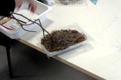 3progetto TERRA coltivare-in-lana-idroponica