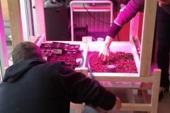5progetto TERRA coltivare-in-lana-idorponica