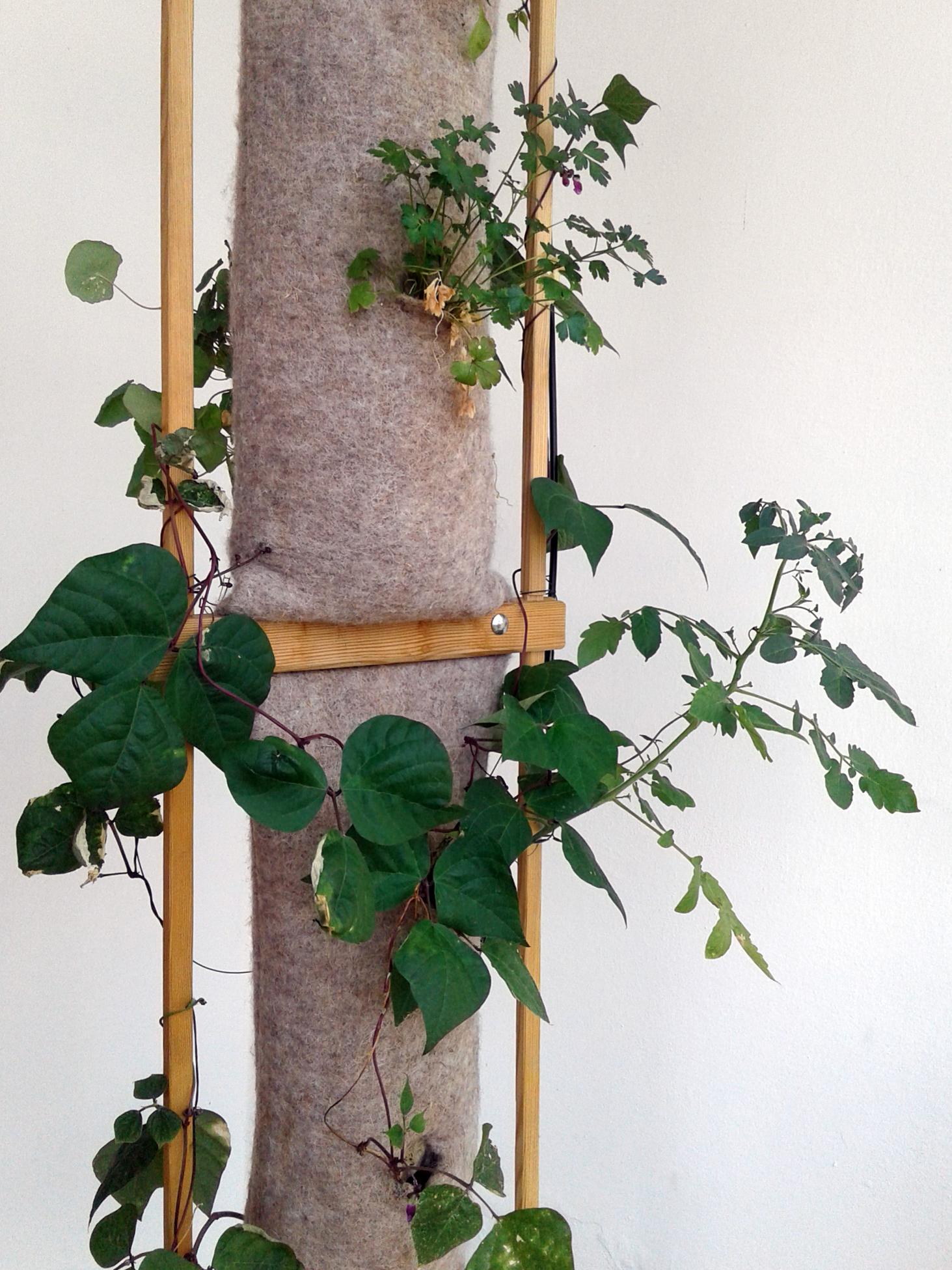 Coltivazione verticale in lana