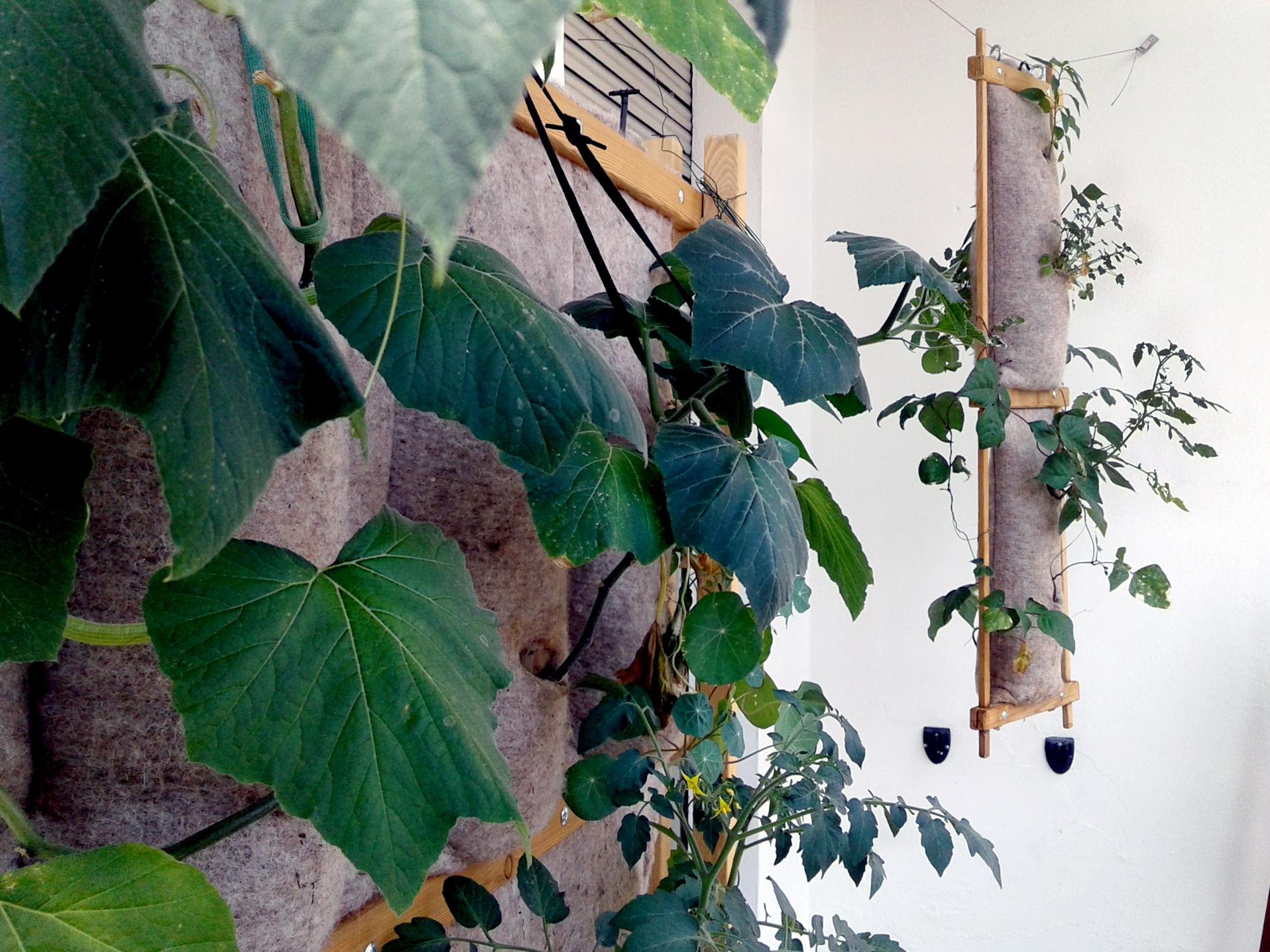 Modulo verticale per coltivazione idroponica in lana